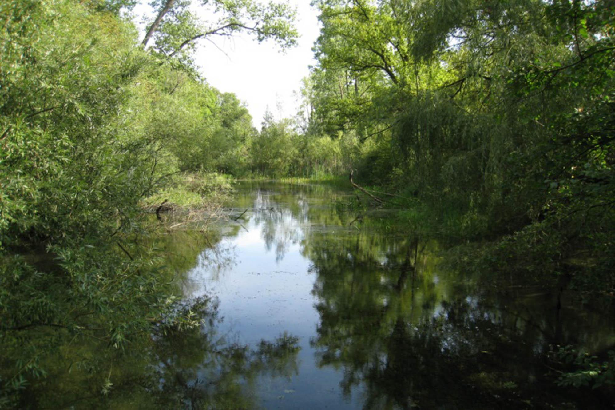 Biotop bei Taubergießen nähe Europapark