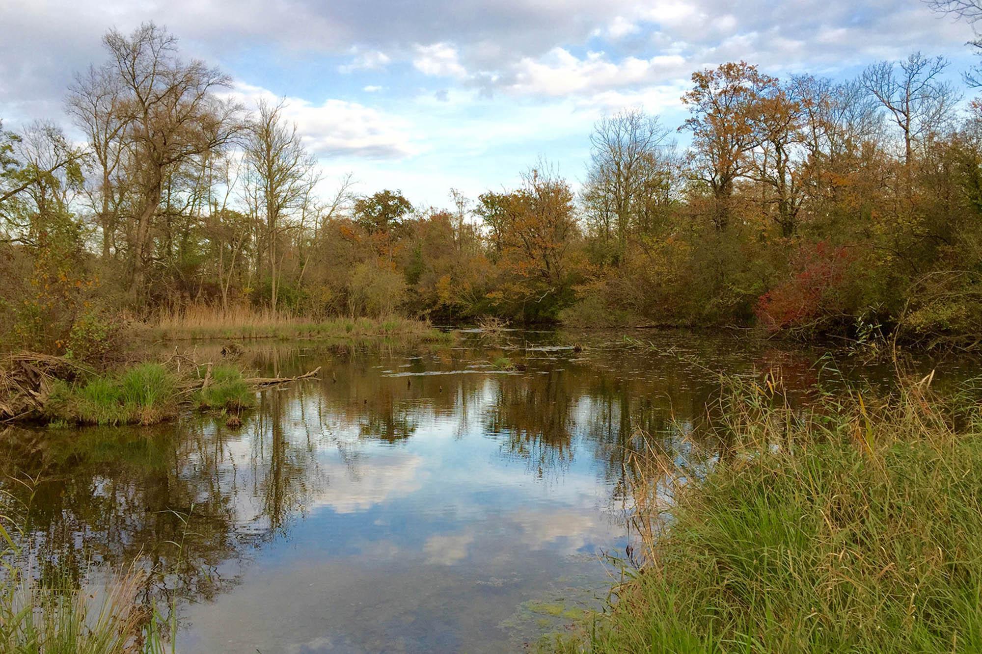 Biotop bei Taubergießen