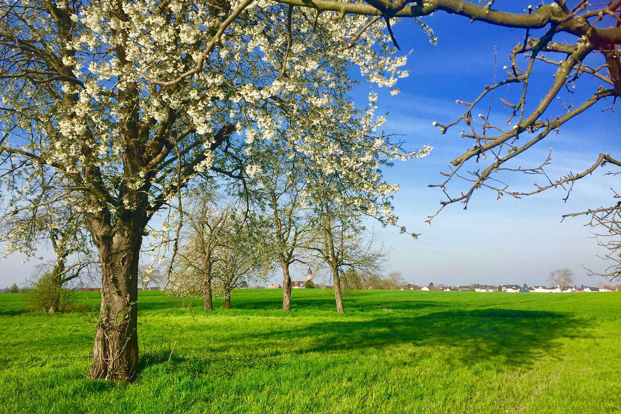 Schöne Wiese in der nähe vom Europapark Rust